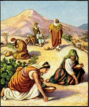 Gathering Manna Exodus 16:14-31